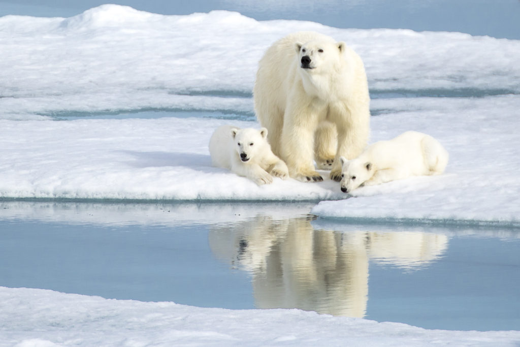 A,Mother,Bear,Keeping,An,Eye,As,Her,Two,Cubs